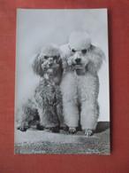 Poodles.     Ref 5216 - Cani