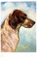 Dogs Portrait By G. Mü Vintage Postcard - Cani