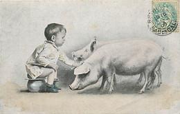 ANIMAUX COCHON FANTAISIE - L'Enfant Le Pot Et Les Cochons (de 1906) - Maiali