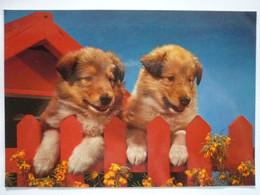 AK Italien, Hund Collie - Dogs
