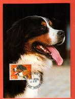 EZ-38e Bouvier Bernois, Carte-Maximum-Karte Avec Date Du Jour D'émission Du Timbre 22.8.83. Berner Sennenhund - Dogs