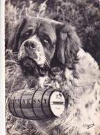 HARRY DU RAINCY - Superbe ST BERNARD  Eleveur Propriétaire M.CLEMENT - Dogs