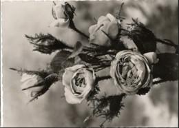 CPM Roses Mousses - Zonder Classificatie