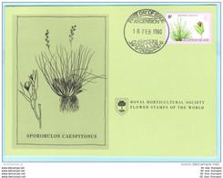 ASCENSION - FDC - Karte - 255 Farne Und Gräser - Pflanzen (2 Scan)(129486) FFF - Ascension
