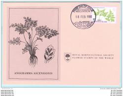 ASCENSION - FDC - Karte - 253 Farne Und Gräser - Pflanzen (2 Scan)(129484) FFF - Ascension
