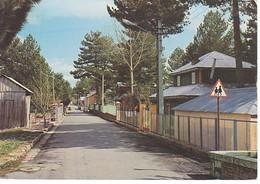 LA SILA - CAMIGLIATELLO 1971 - Altre Città