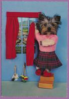 Chien Yorkshire Terrier Humanisé - Installation Des Rideaux.... - Chiens