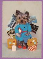 Chien Yorkshire Terrier Humanisé - Retour De Voyages - Chiens