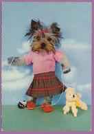 Chien Yorkshire Terrier Humanisé - Ben Quoi...., Je Joue Avec Mon Chien....... ! - Chiens