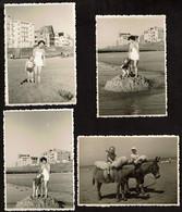 4 Photos Originales 10 X 7 Cm - 1951 - Knokke - Sur La Plage / A Dos D'âne - Voir Scan - Plaatsen