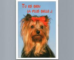 Chien Et Chienne   - Tu Es Bien La Plus Belle ..! - Cpm - Chiens
