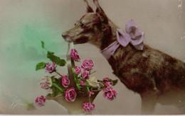 Vraie Photo Colorisée : Chien Au Gros Noeud Présentant Un Panier De Roses - Chiens