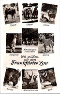 (5 A 25) (very Old Postcard) Germany - Frankfurt Zoo - Other