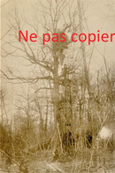 CARTE PHOTO ALLEMANDE - UN OBSERVATOIRE DANS UN ARBRE DEVANT VERDUN MEUSE - GUERRE 1914 1918 - Oorlog 1914-18