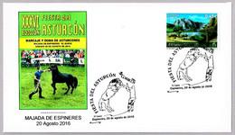 FIESTA DEL CABALLO ASTURCON - ASTURCON HORSE FESTIVAL. Majada De Espineres, Asturias, 2016 - Horses