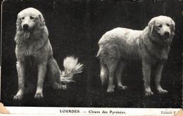 N°19079 Z -cpa Chiens Des Pyrénées - Chiens