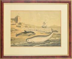 Cca 1850-1890: Cethal és Bálna. Acélmetszet, Papír, Jelzés Nélkül, üvegezett Fa Keretben, 25x35 Cm - Gravuren