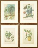 Cca 1903 össz. 4 Db Növényi Témájú Metszet, Kromolitográfia, Papír, üvegezett Fa Keretben, 2 Db Foltos, 28×19 Cm - Gravuren