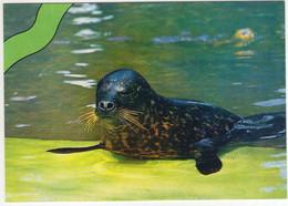 Zeehond Pup - (Nederland/Holland) -  Seal / Seehund / Phoque - Nr. L 3362 - Other