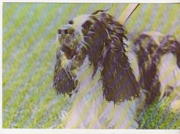 Romania Old Postcard - Dogs - Chiens