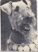 USSR Old Uncirculated Postcard - Dog - Chiens