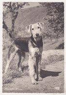 Germany Old Used Postcard - Dogs - Chiens