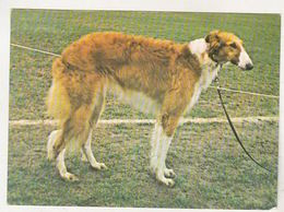 Romania Old Uncirculated Postcard - Dogs - Chiens