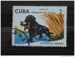 Cuba 1976 Chien De Chasse Jachthonden Retriever Du Labrador Yv 1905 O - Used Stamps