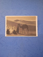 Cammelli-nel Deserto-ed.fot.l.pignat-udine-fp- - Other