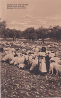 1900-1910s; Shepherd And Sheep - Other