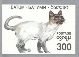 BATUM Cats 1,used - Domestic Cats