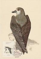 Portugal & Maximum Card, Birds Of The Madeira Region, Pterodoma Madeira, Lisbon 1987 (52A) - Columbiformes