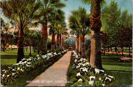 California Long Beach Scene In The Park - Long Beach