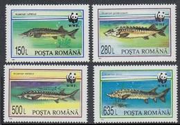 1994Romania5034-5037Sea Fauna / WWF5,00 € - Neufs