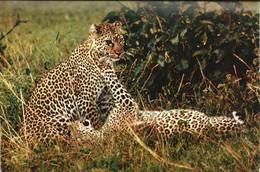 FAUNE AFRICAINE - Léopards - Other