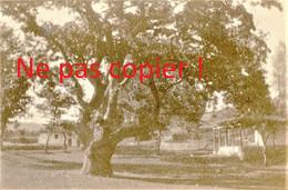2 PETITES PHOTOS FRANÇAISES - VIEILLE ARBRE DU MONASTERE DE KOZANI Κοζάνη PRES DE PTOLEMAIDA - GRECE  GUERRE 1914 1918 - 1914-18