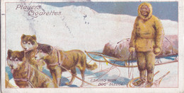 6 Eskimo With Dog Sled -  Polar Exploration 1915 - Players Cigarette Card - Arctic - Antique - Wills