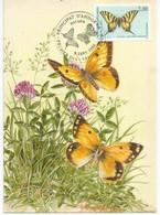 "ANDORRA. Papillon ""Le Flambé"". Carte-maximum  Premier Jour 1994 - Maximumkarten (MC)"