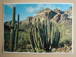 Organ Pipe Cactus - Arizona - Other