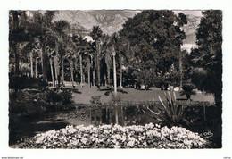 MONTE-CARLO:  VEGETATION  EXOTIQUE  DES  JARDINS  DU  CASINO  -  PHOTO  -  FP - Exotic Garden