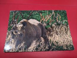 RHINOCEROS - Rhinoceros