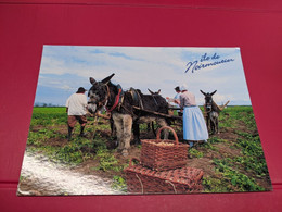 ANE ATTALAGE ILE DE NOIRMOUTIER PANIER OSIER - Donkeys