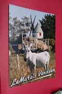 ANE MOULIN A VENT LE MARAIS VENDEEN - Donkeys