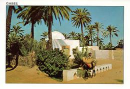 TUNISIA - Gabes - Donkeys