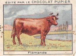PIE-T-PL-21-3697 : IMAGE  OFFERTE PAR LE CHOCOLAT PUPIER. VACHE FLAMANDE - Sin Clasificación