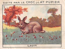 PIE-T-PL-21-3699 : IMAGE  OFFERTE PAR LE CHOCOLAT PUPIER. LAPIN - Sin Clasificación