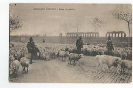 Italie Campagna Romana Verso Il Pascolo Animée Moutons - Non Classificati