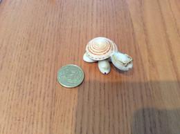 "Miniature ""tortue"" (coquillages) Type 2 - Tartarughe"