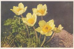Cartolina Tematica Floreale - Viaggiata - Fiori