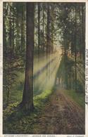 Cartolina Tematica Floreale - Viaggiata - Alberi